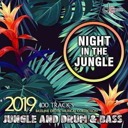 Night In The Jungle
